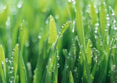 Lawn Trim Services