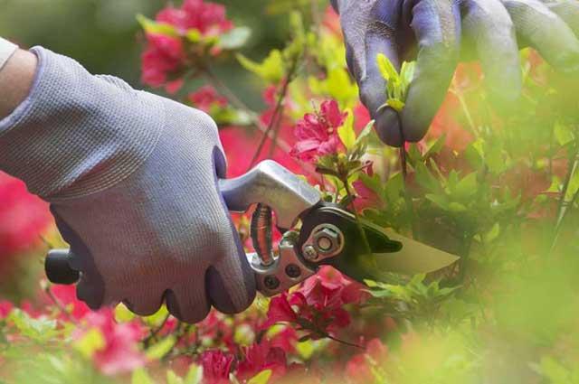 lawn trim services in kelowna