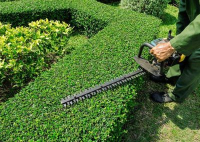 Hedge, Shrub and Tree Pruning